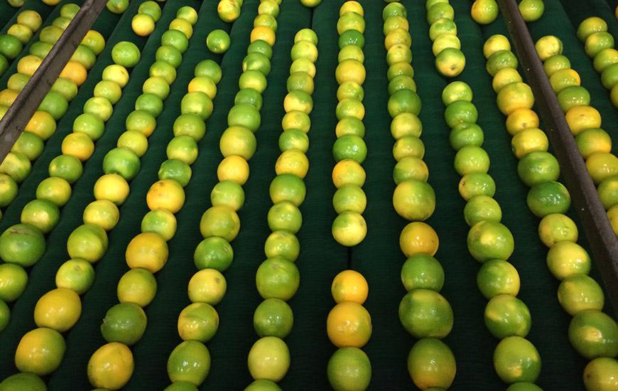 Villalva Frutas